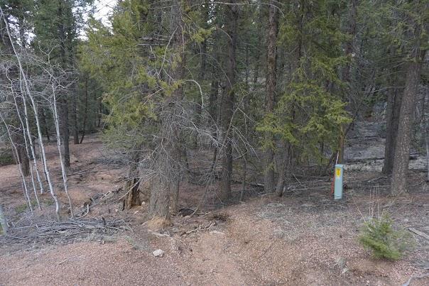 Cheap Land Colorado Mountain Estates Paint Pony Ln