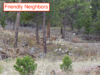 seller-financed-land-in-fremont-county-colorado
