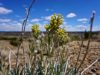 cheap-for-sale-land-in-nm