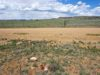 seller-financed-land-close-to-eleven-mile-canyon